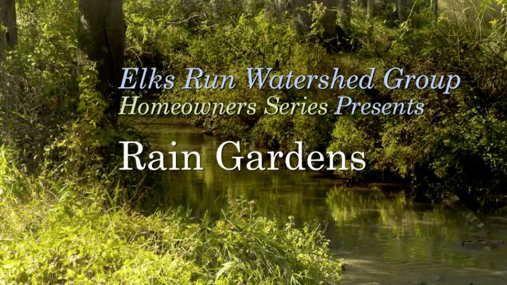 raingardens