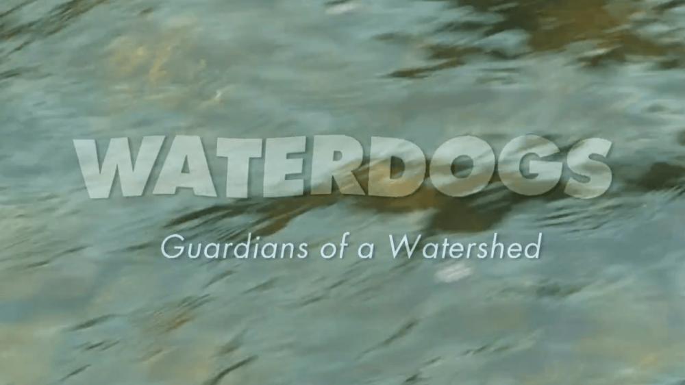 waterdogs