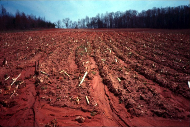 This field needs contour farming and crop rotation