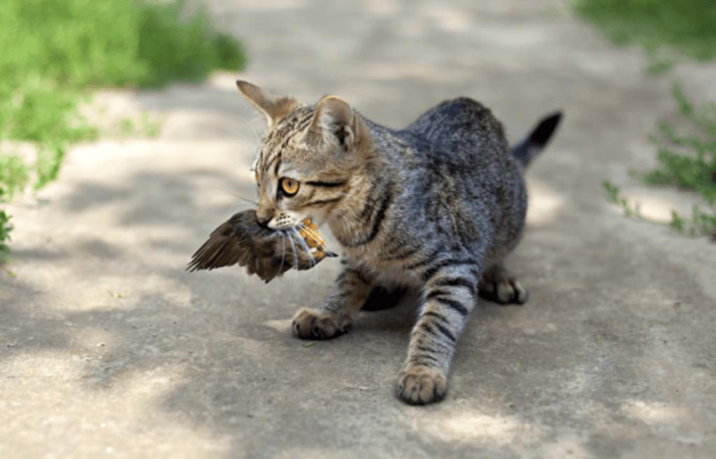 Outdoor cats kill birds.