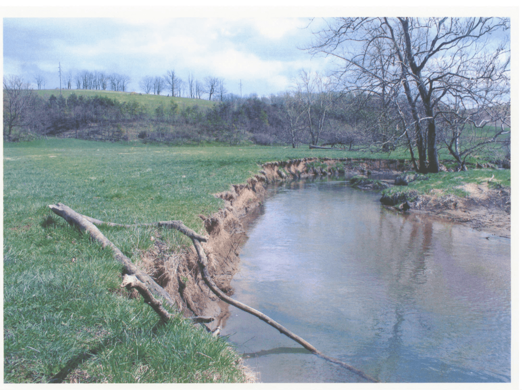 Middle River before cattle were fenced out.