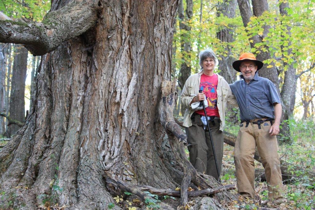 Old-growth sugar maple