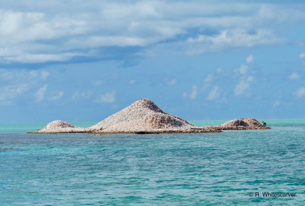 Anegada conch mound