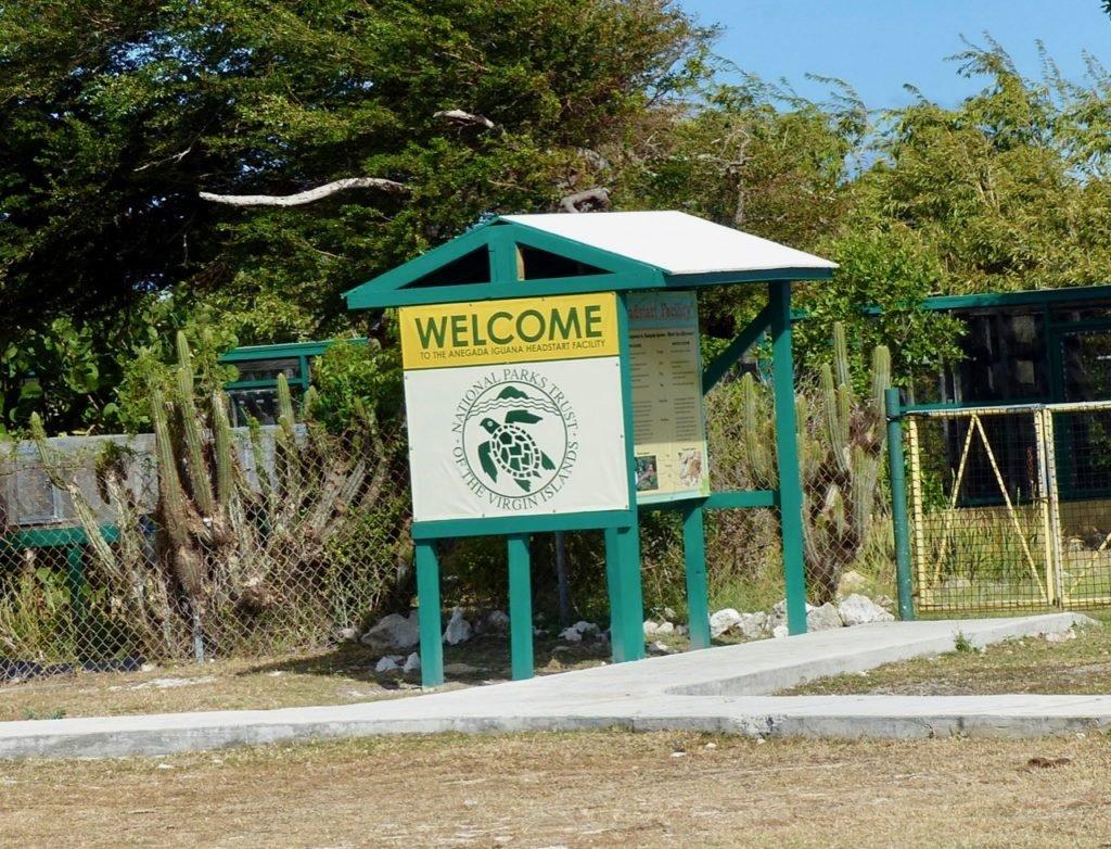 Anegada Iguana Headstart Facility